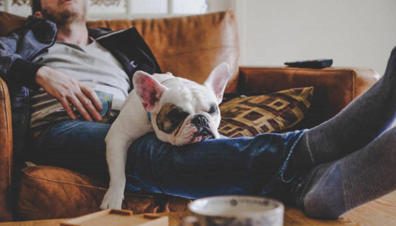 Dog asleep on owner's lap